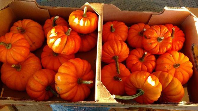 A spook-tacular Halloween Party!